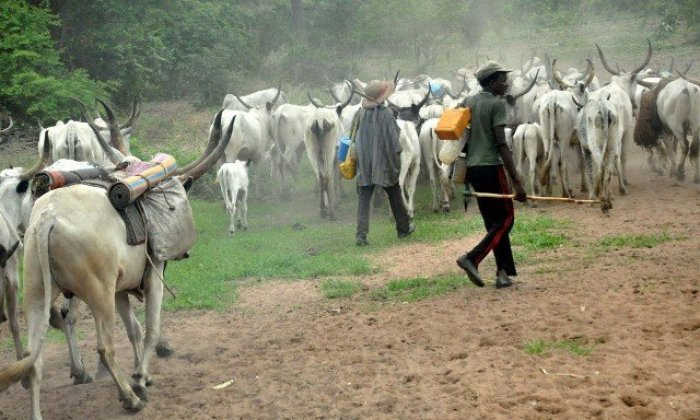 Only herdsmen with families allowed to graze in South-East – Miyetti Allah