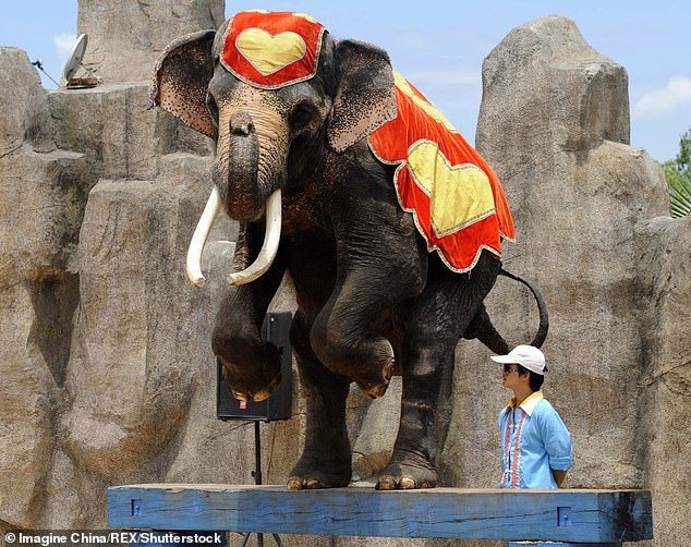 Sexually aroused elephant tramples keeper to death in China zoo