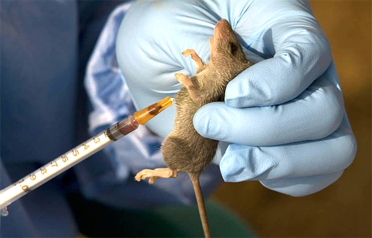 63 under surveillance as Lagos records first case of Lassa fever